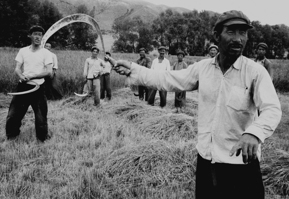 Peasants pause from harvesting  to point the way to the driver unsure of the direction to take in the foothills of the Tien Shan mountains, Sinkiang, far western China, July 1956.  (RDH C106-22)