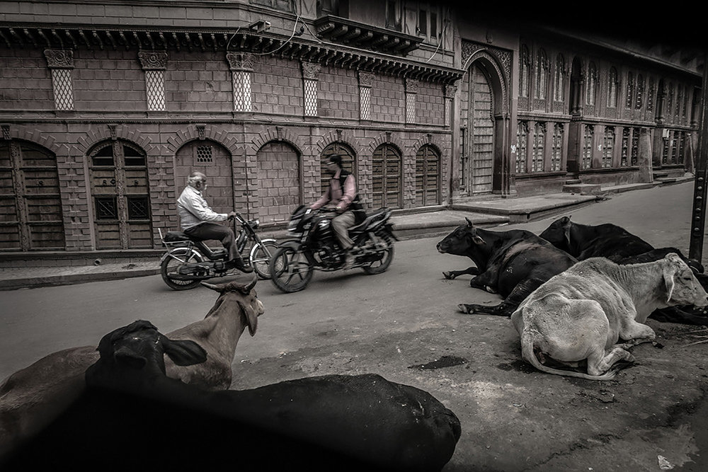 Cai Huansong: 比卡内尔,  India , 2015 (DSC3094)