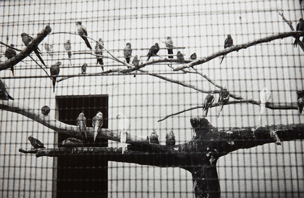 Peter Peryer.  Birds, Auckland Zoo , 1983