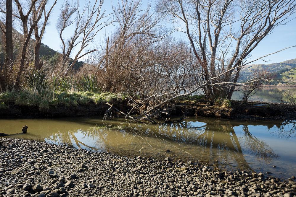 Arabella Spoors,  Lake Forsyth Wairewa, Bloodlines
