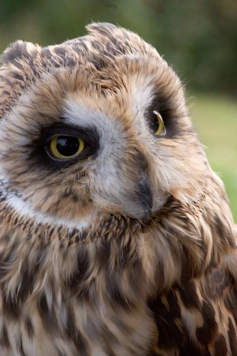 owlbirdie.jpg