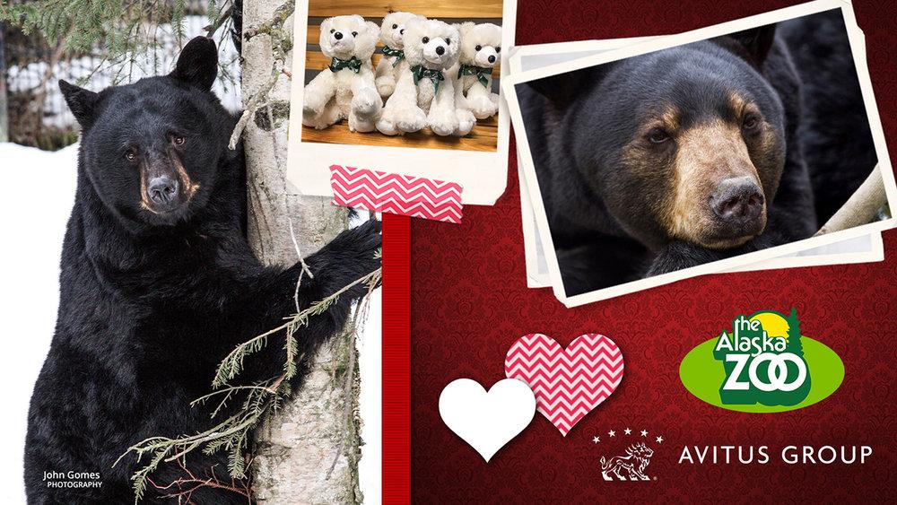 Black Bear 1280x720.jpg