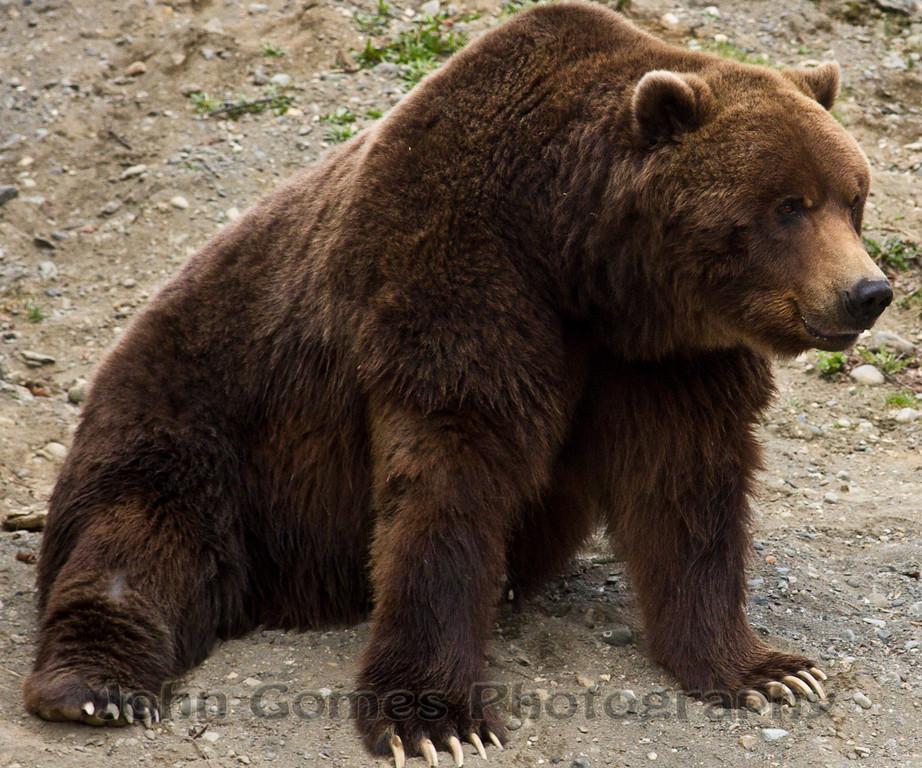 big jake bear aware 2011.jpg