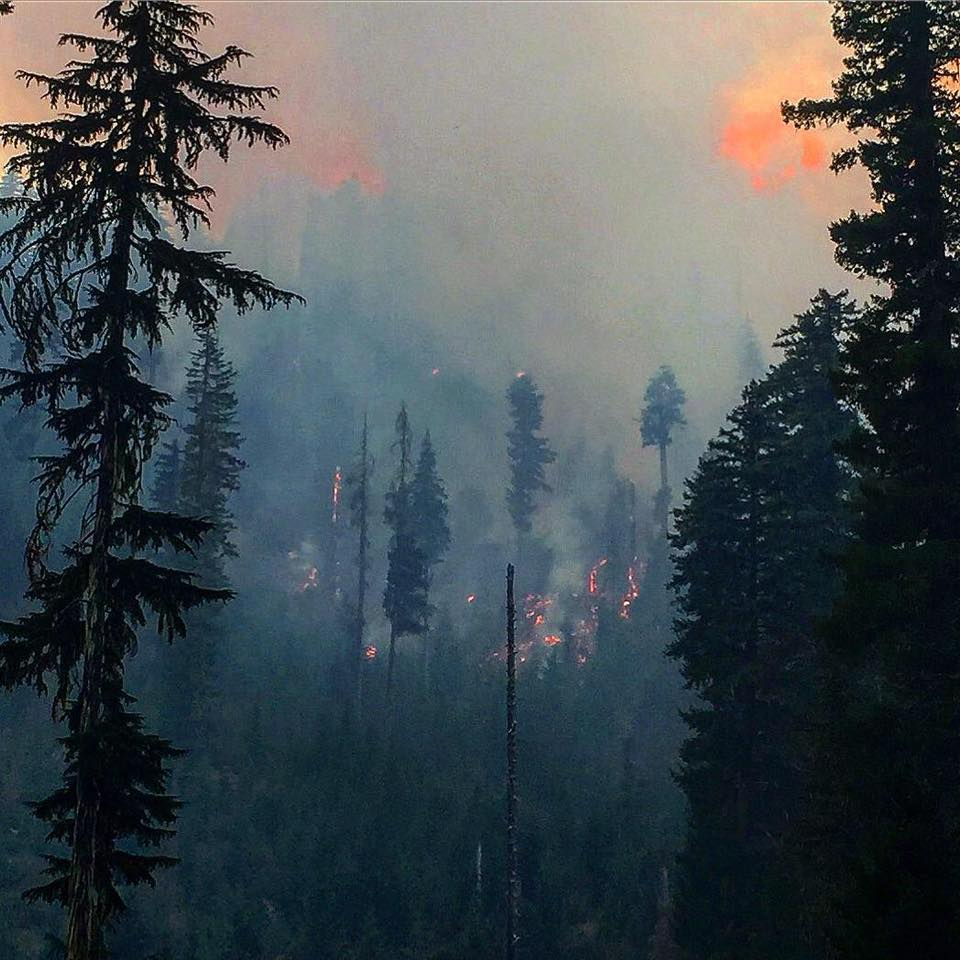 Active fire Sept. 11 on the Pup Fire near Hershberger Creek. Photo by Josef Porter (Inciweb)