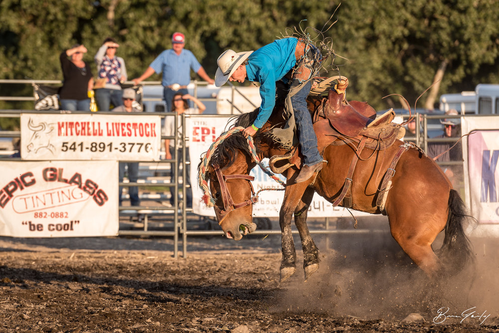 This bronc was too much for this cowboy at the Beauty and the Beast Rodeo. Image:  Brian Gailey  Tulelake Butte Valley Fair 2017