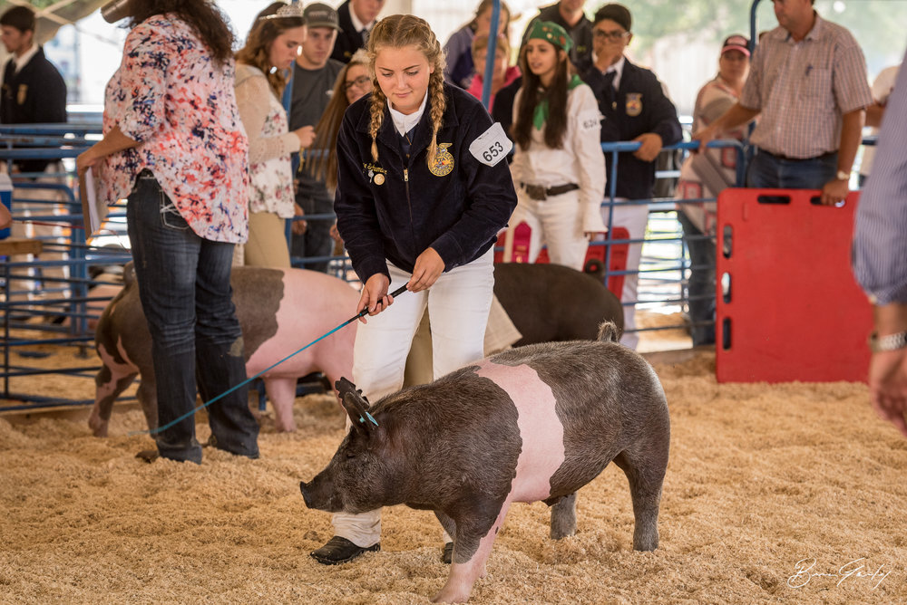 Grace Schumacher shows her hog just before winning Grand Champion.  Image:  Brian Gailey  Tulelake Butte Valley Fair 2017
