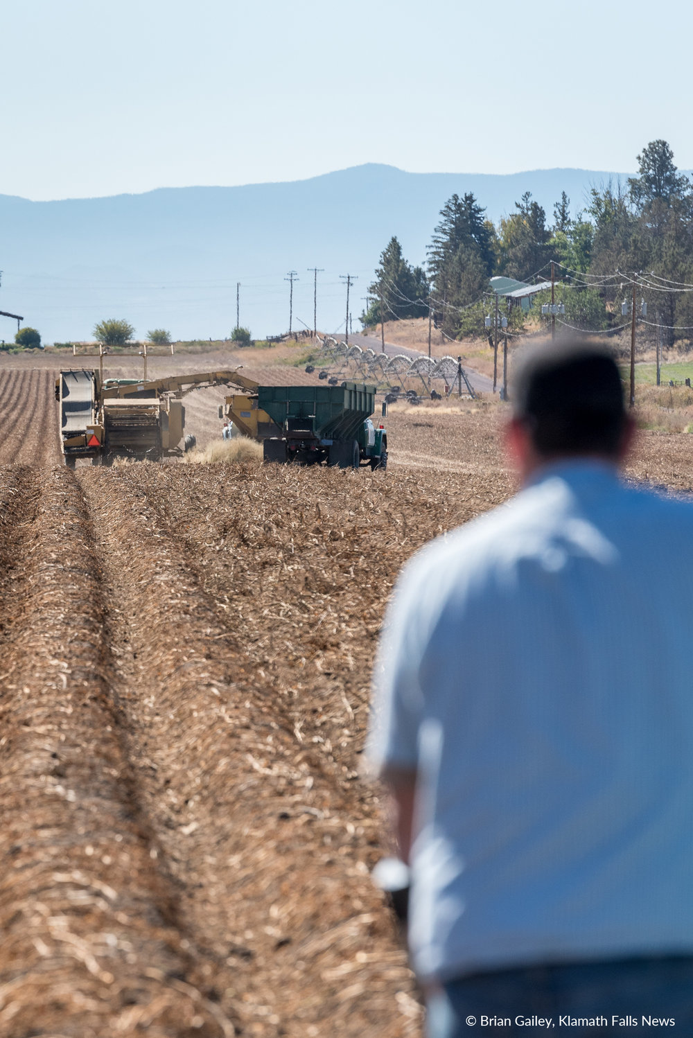 A farmer looks on as the harvester pulls potatoes from the ground. (Brian Gailey)