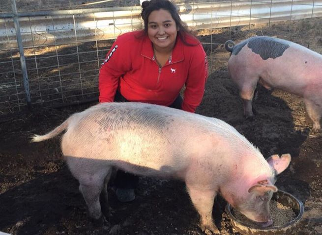 Hi my name is lupe I and a senior this year at bonanza high school, I plan on going to college for criminal justice next fall. I have been in the ffa program since I was in the 8th grade. Since I was a freshman I started taking a swine project to the Klamath county fair and have done a great job on my swine projects this year the pigs I got were born late and where a bit small for the fair time. But I still worked hard on walking them and making sure they were always fed and watered they are currently around 255 pounds and are still every friendly.