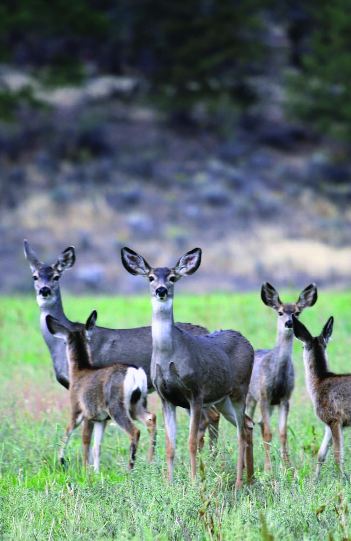 Wildlife_Deer-Migration-Brochure1.jpg