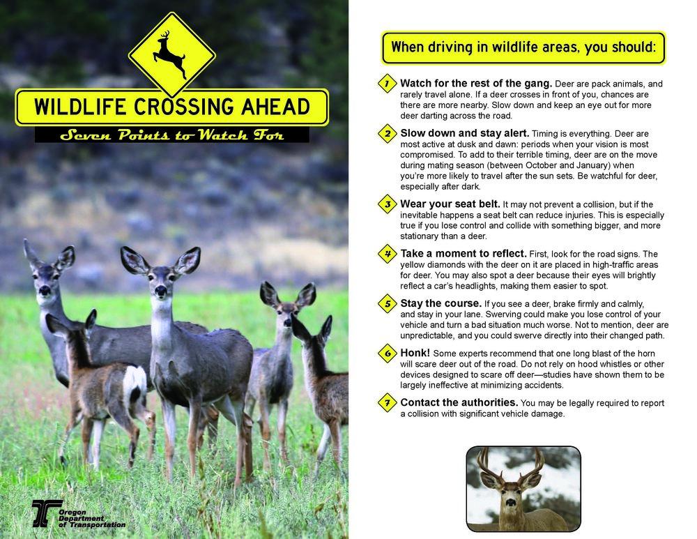 Wildlife_Deer-Migration-Brochure.jpg