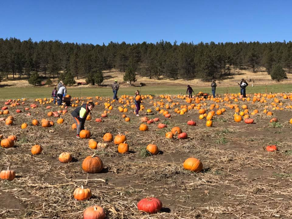 Cornelius Family Pumpkin Patch (Brian Gailey)