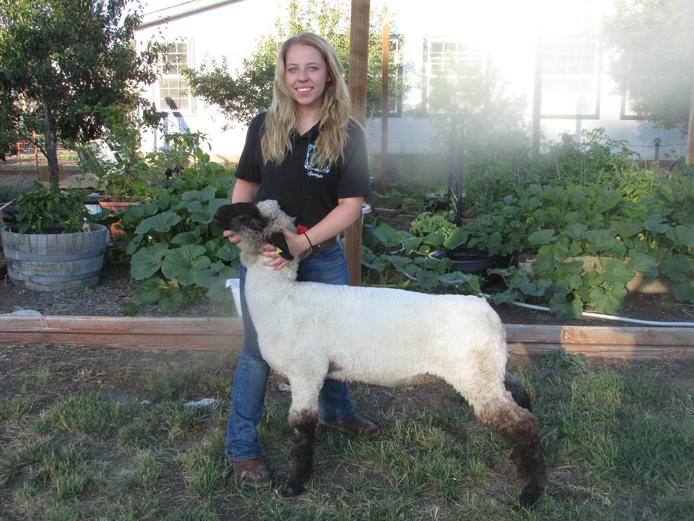 Grace Maxfield and her Lamb. (Submitted Photo)
