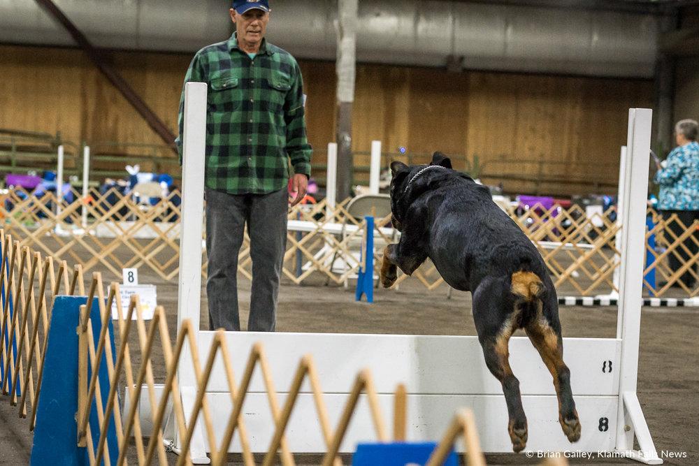 Klamath Dog Show. May 12, 2018 (Brian Gailey)