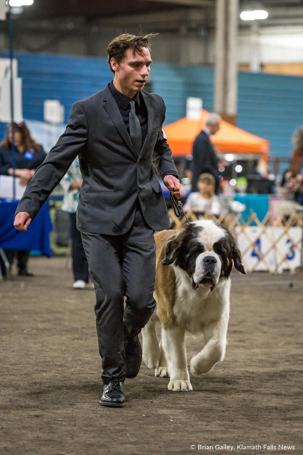 Klamath Dog Show. May 11, 2018 (Brian Gailey)