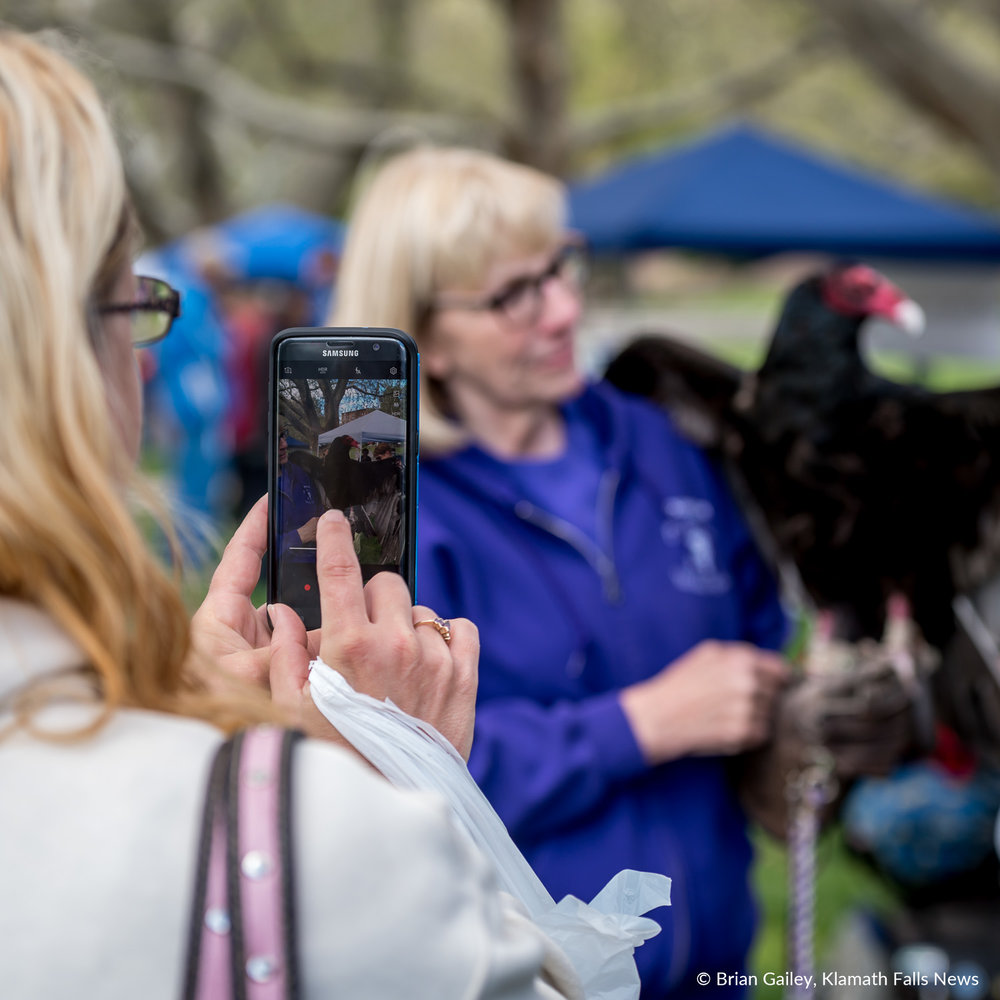 An eventgoer snaps a pic of Dexter, a Turkey Vulture. One of Badger Run Wildlife Rehab's bird ambassadors. May 12, 2018. (Brian Gailey)