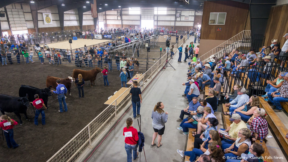 Spectators watch all three show arenas inside the Stillwell Building at the 2018 Klamath County Fair. 4-H Members and FFA Students showcase their animals to see who will become Grand Champion. August 3, 2018 (Brian Gailey)