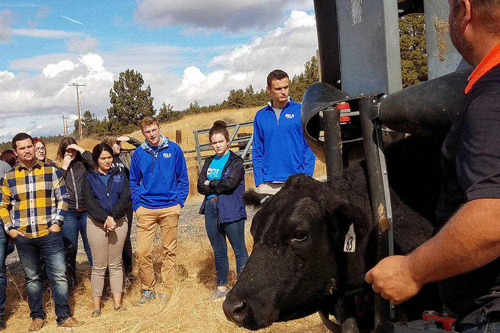 Rancher Jason Chapman demonstrates how equipment holds cattle to provide vaccinations or medications during the first Leadership Klamath Youth tour earlier this month. Pictured from left: Sergio Cisneros, Mazama High School business teacher and FBLA advisor, with FBLA leadership students JoAnna Henry, Brooklyn Mattson, Daniela Garcia, Charity Hamar, Jake Healy, Brazil Cisneros and Gordon McCreadie.
