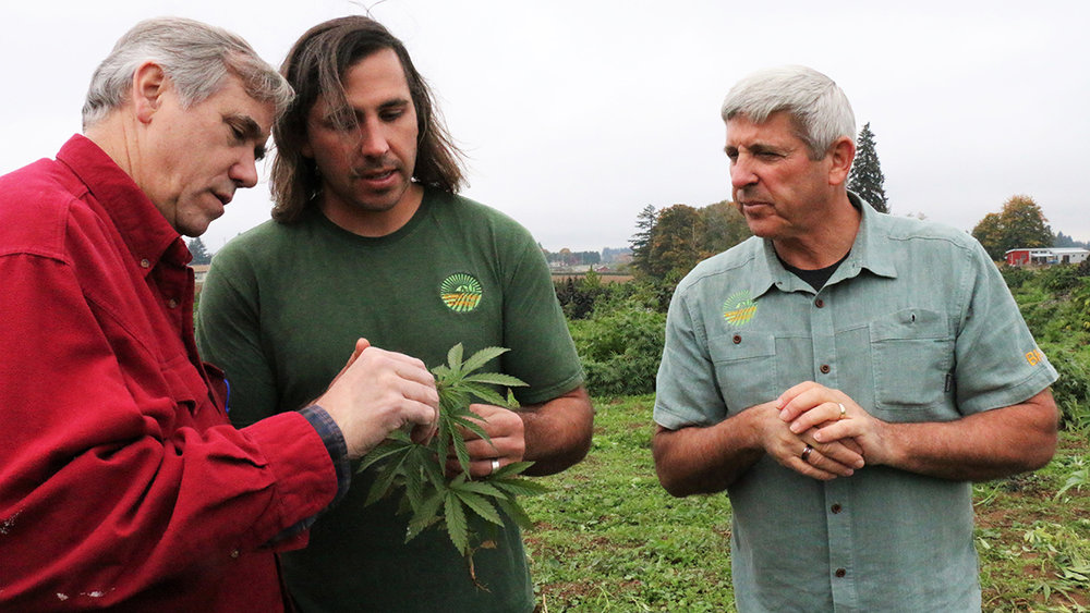 Boring Hemp Company co-owner Sam Cook explains to U.S. Sen. Jeff Merkley how the hemp plants are identified as male or female. Only the female plants are harvested for CBD oil. (Submitted Photo)