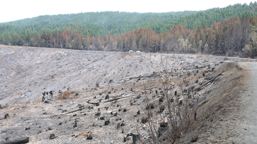 After an intense wildfire, soils may be less able to absorb runoff, raising the risk of flooding and debris flows. A new playbook will help Oregon communities prepare for such post-wildfire hazards. (Submitted Photo)