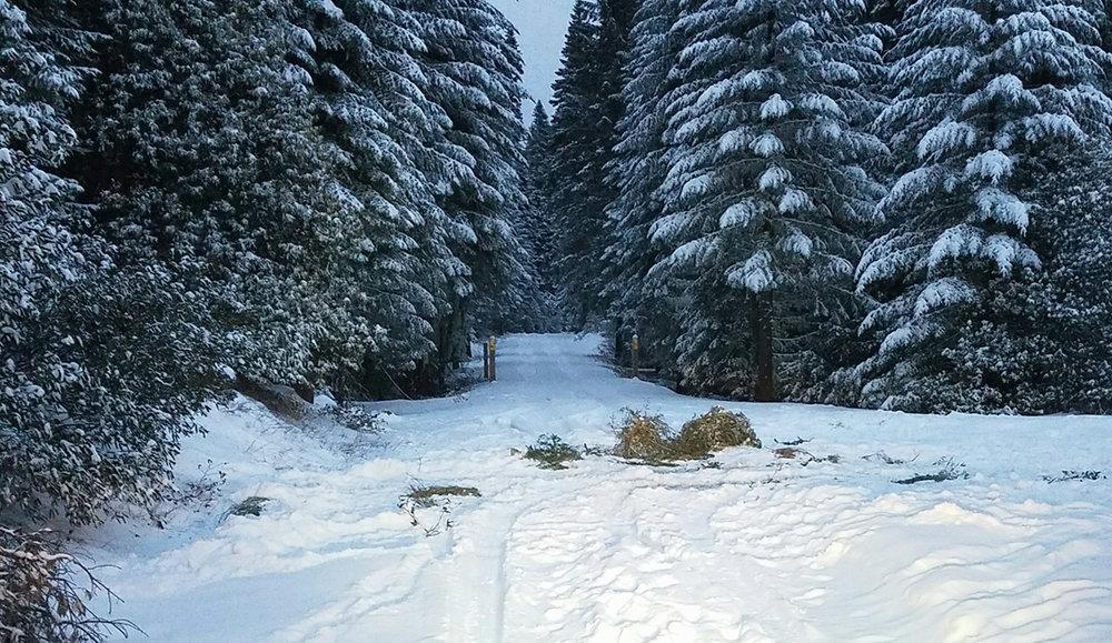 SAR_snow_2018_a.jpg