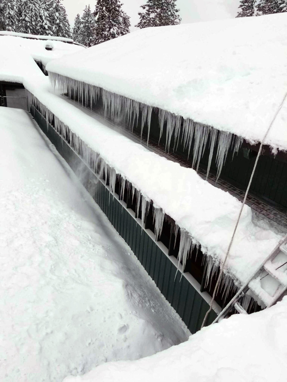 snow-gilchrist 4.jpg