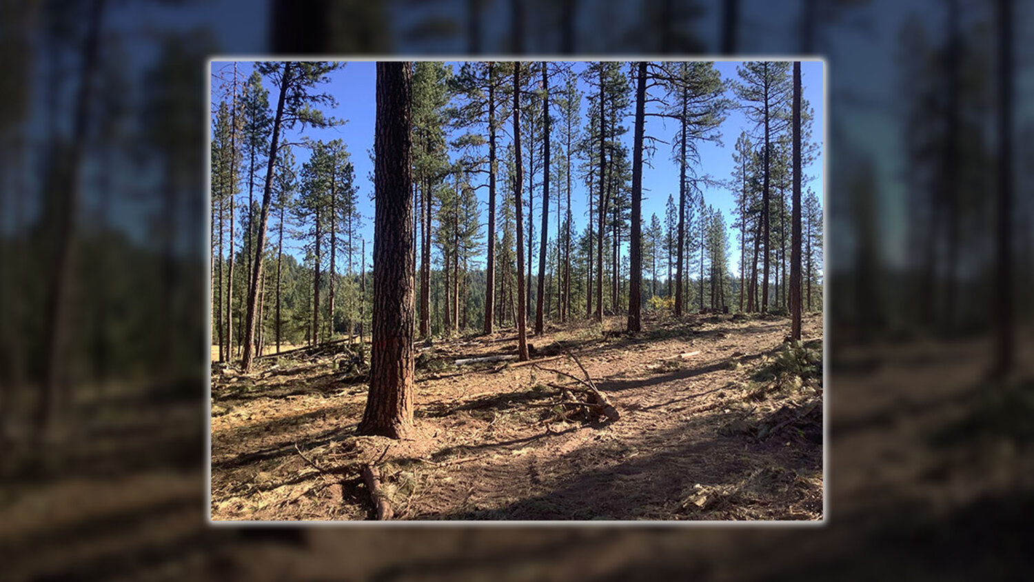 Paddock Butte Forest Restoration Project showcases Good Neighbor Authority, public-private collaboration - Klamath Falls News