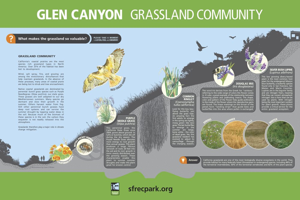 InkeDesign-Glen-Canyon-Park-Interpretive-3Grasslands.jpg