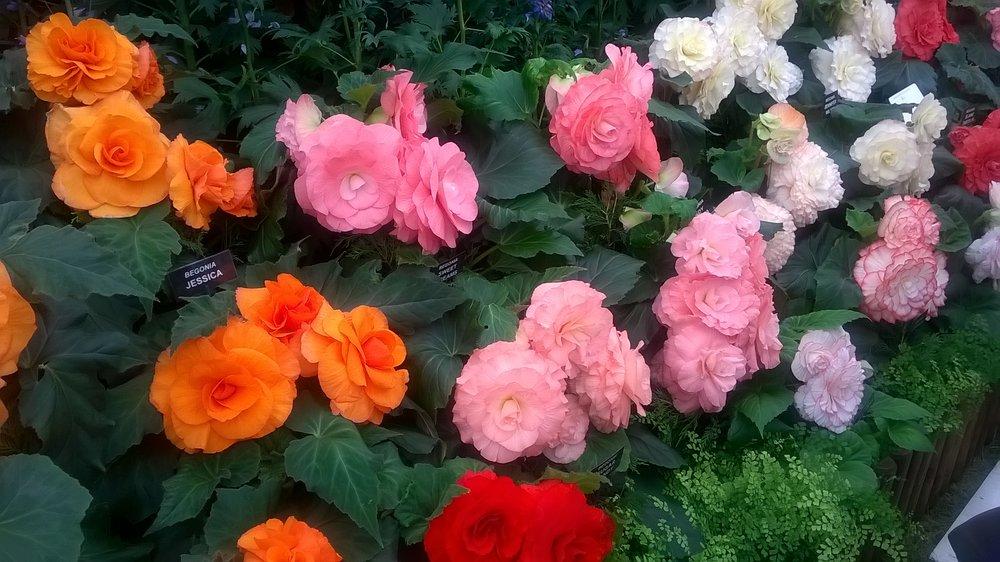 RHS Plants