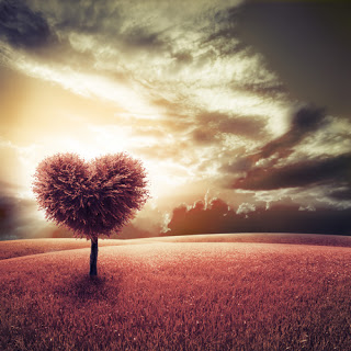 Heart-shaped tree in field