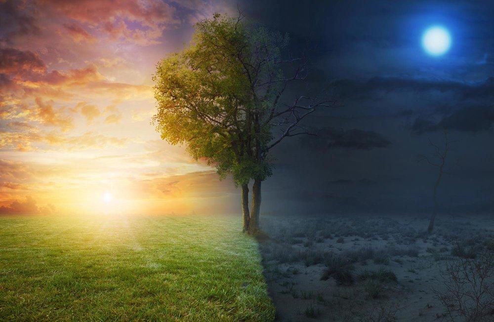 tree-life-death.jpg