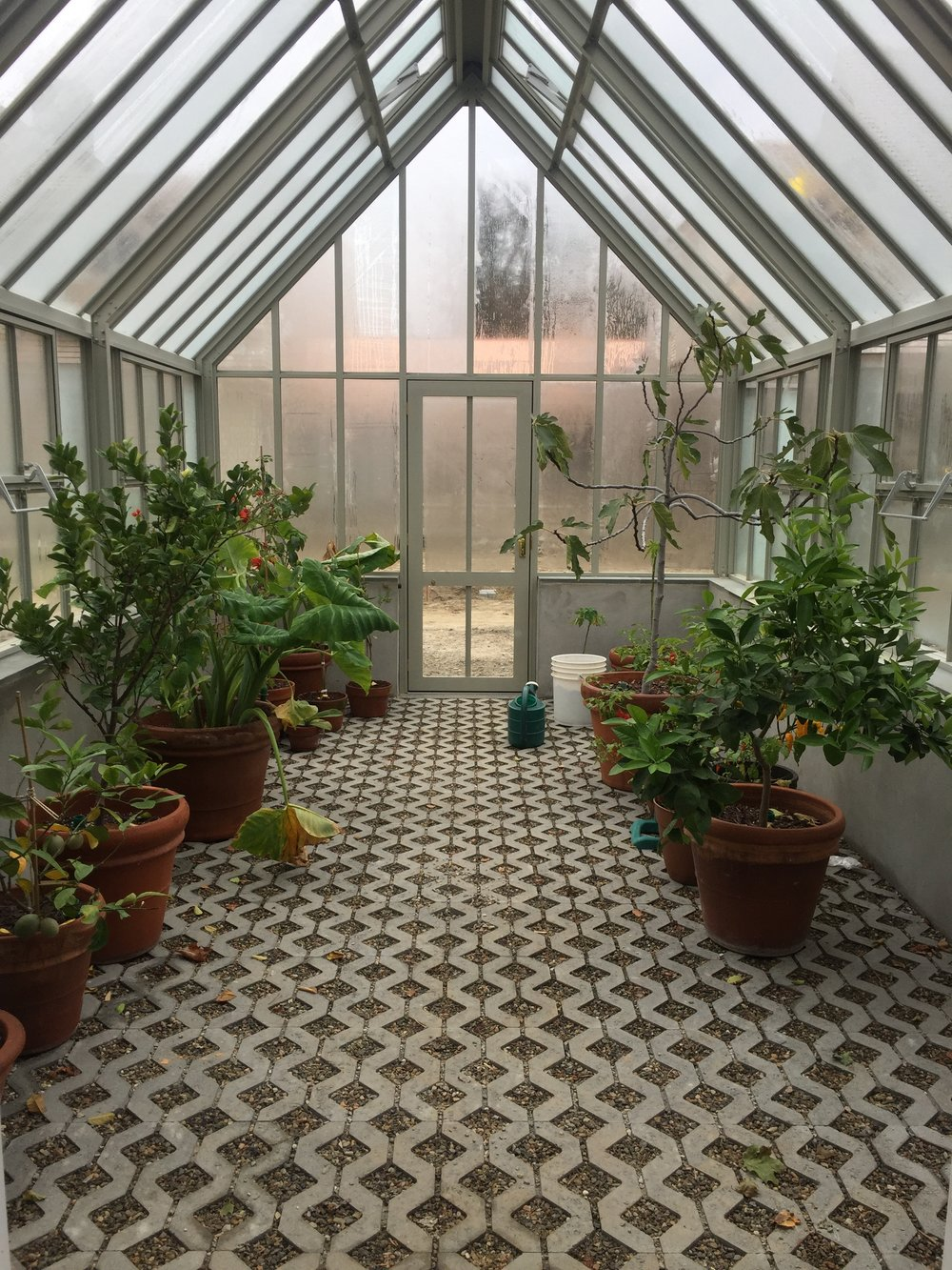 plants in green house.JPG