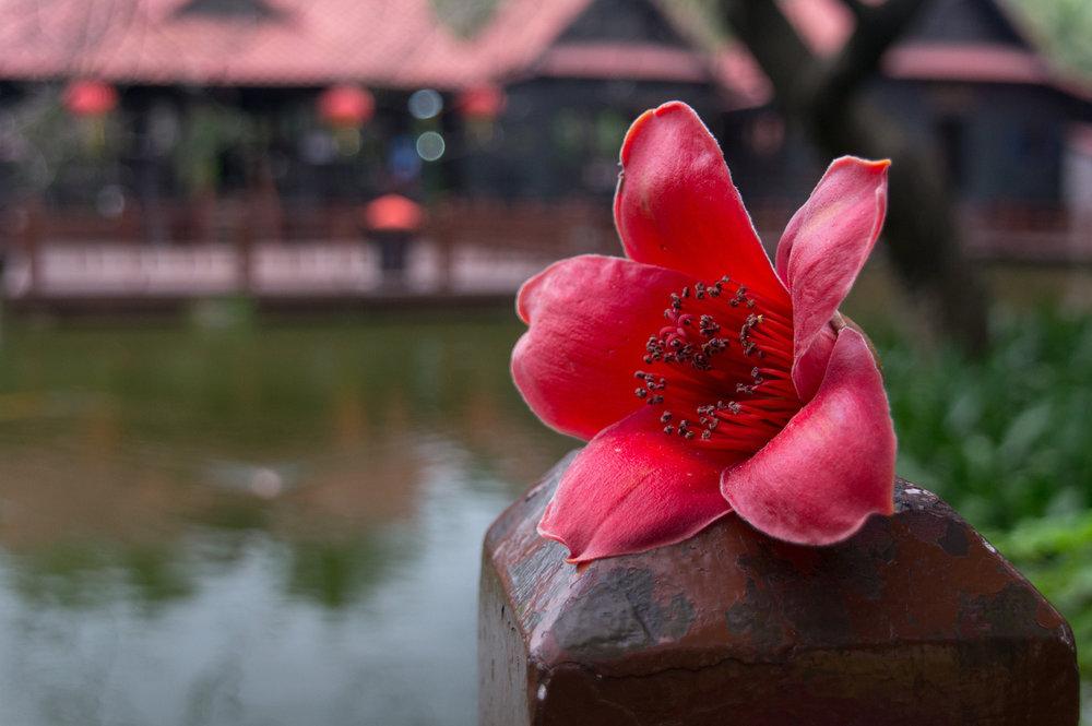 Flower .jpeg