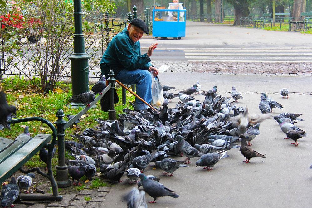 travel local man pigeons.jpg
