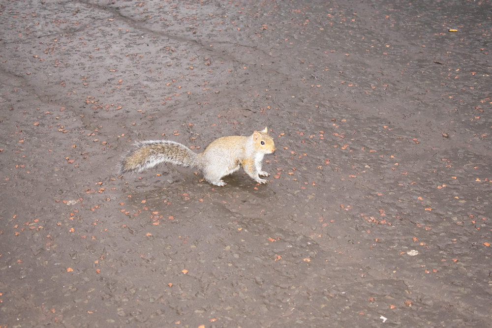 The super-friendly squirrel in Princes Street Gardens