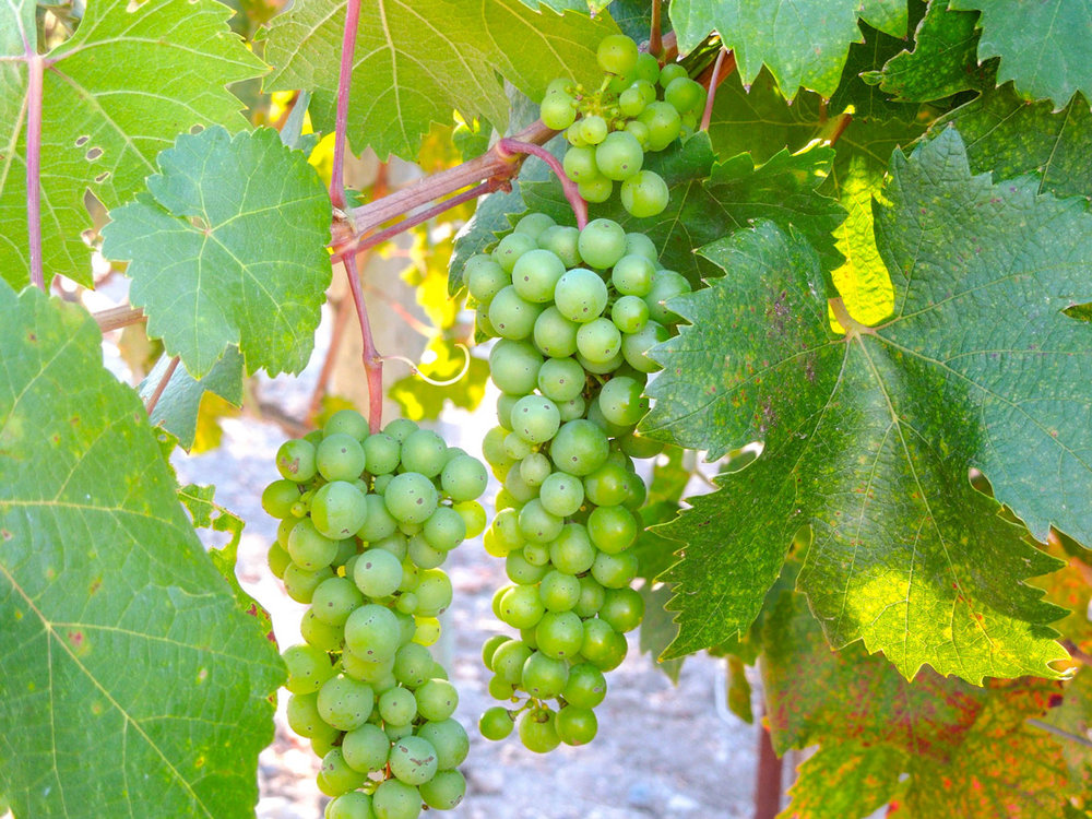 Spending Time In The Heart of the Sonoma Valley   California Wine Country  Napa Valley   Wine