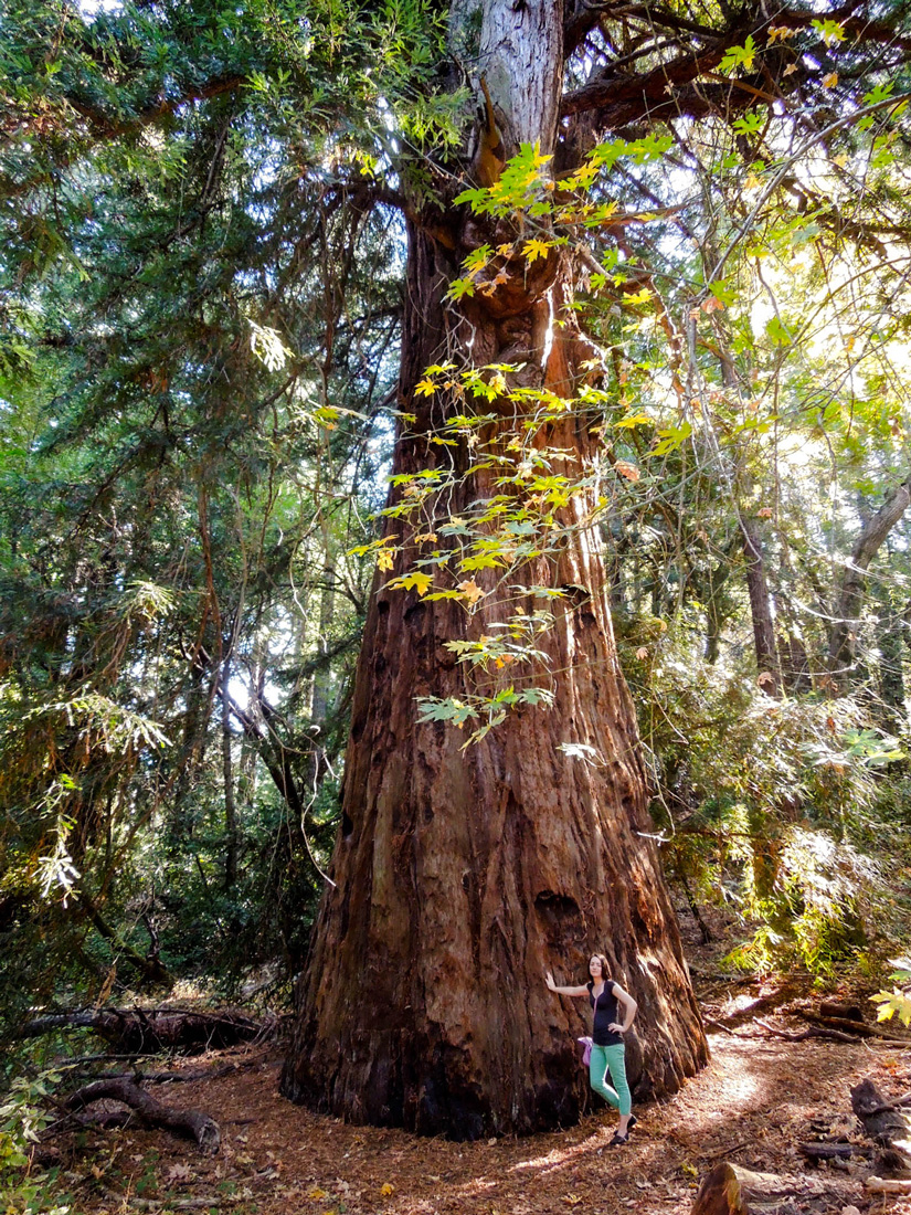 Spending Time In The Heart of the Sonoma Valley   Jack London State Park   California Redwoods