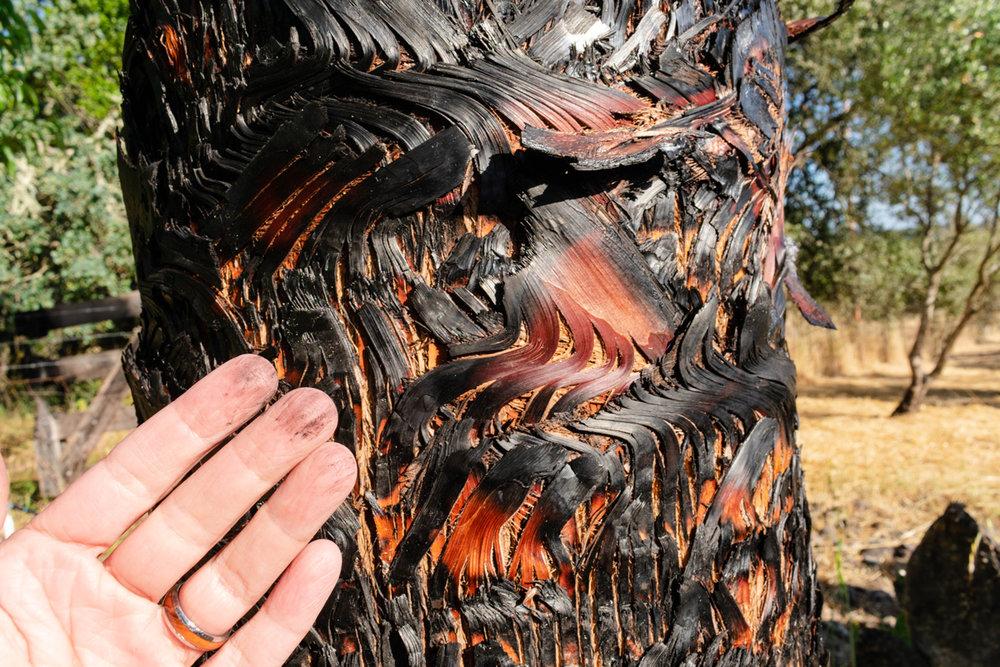Spending Time In The Heart of the Sonoma Valley Beltane Ranch   Glen Ellen Fire Damage
