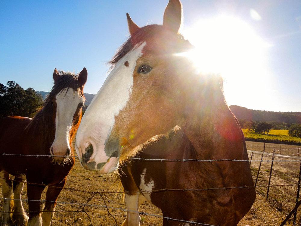 Spending Time In The Heart of the Sonoma Valley Beltane Ranch   Glen Ellen California Winery