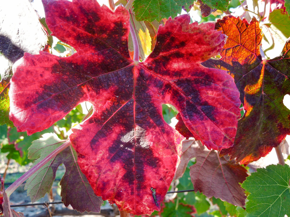 Spending Time In The Heart of the Sonoma Valley Beltane Ranch   Glen Ellen California Winery  Fall Colors