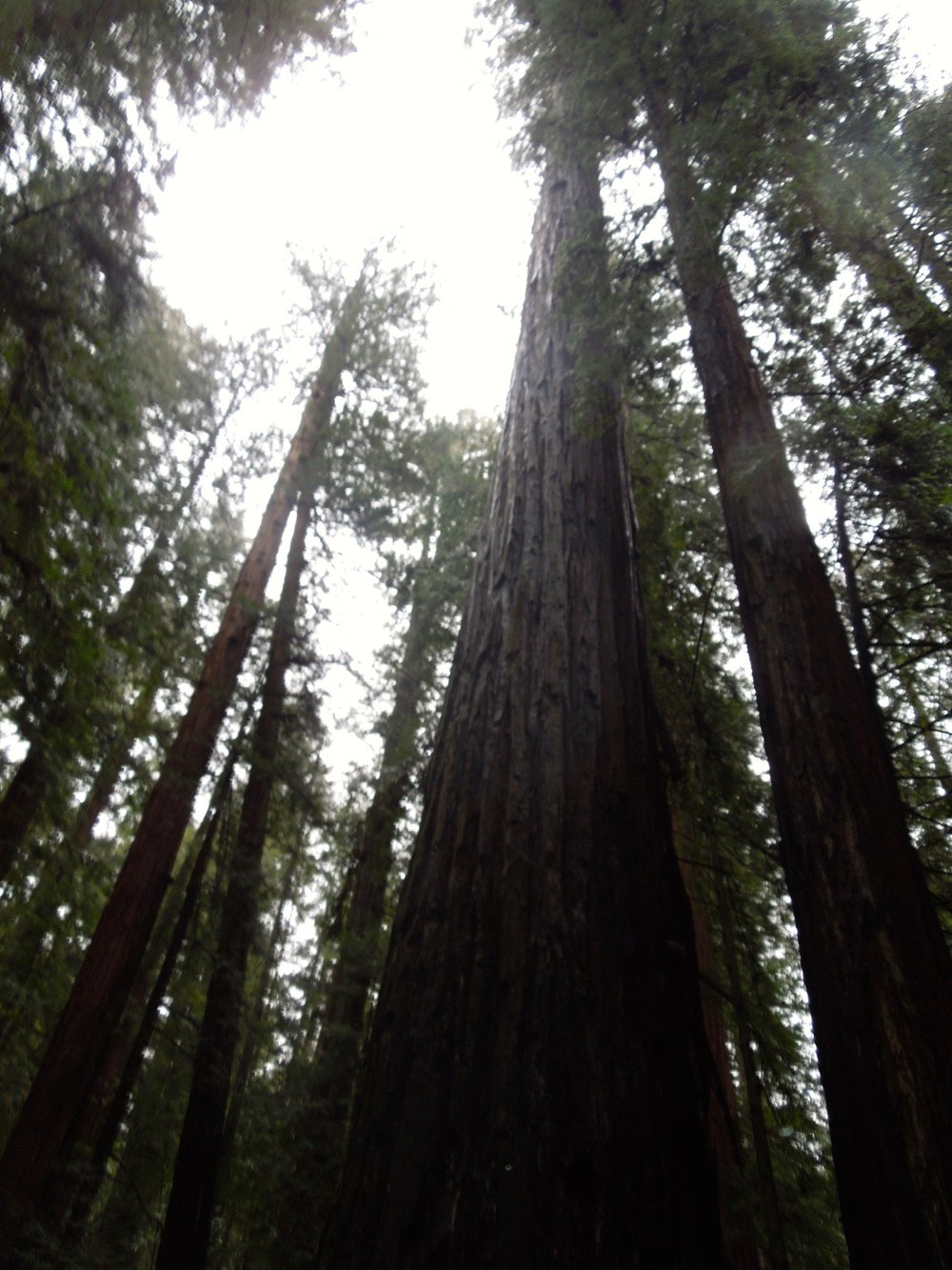 Quick US Trips: Spots To Travel To For The Day Or Weekend California Redwoods