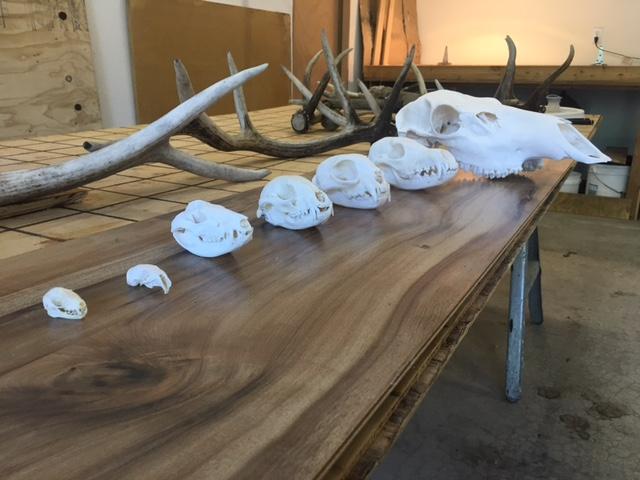 2015 Skull Collection.JPG