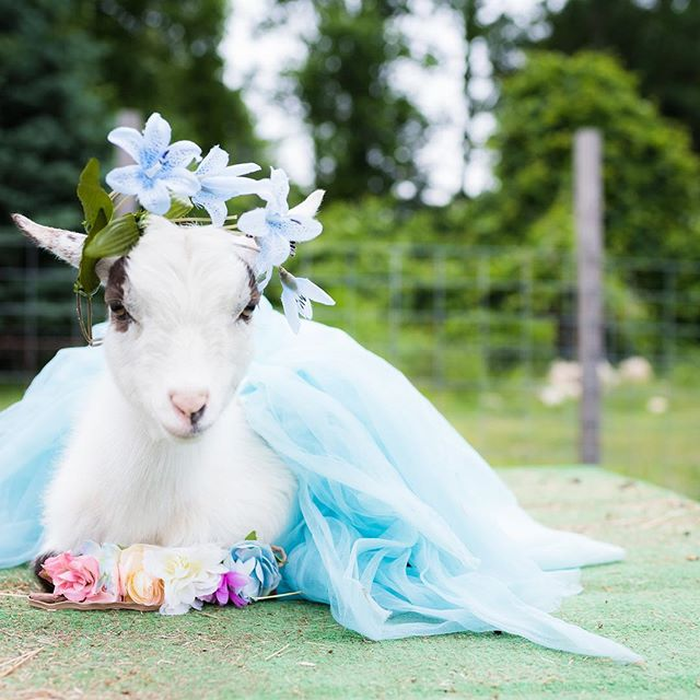 This is your life. Make it beautiful. 💙 • • • • • • #flowercrowns #tutu #goatsofinstagram #calendar #inspire #smile #beauty #flowers #behappy 📷 @fullofwhimsyphotography