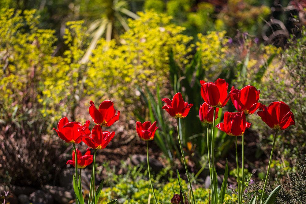 018_uv_garden_TB21424.jpg