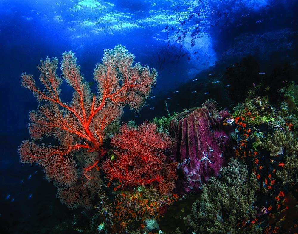 Indonesia Reef.jpg