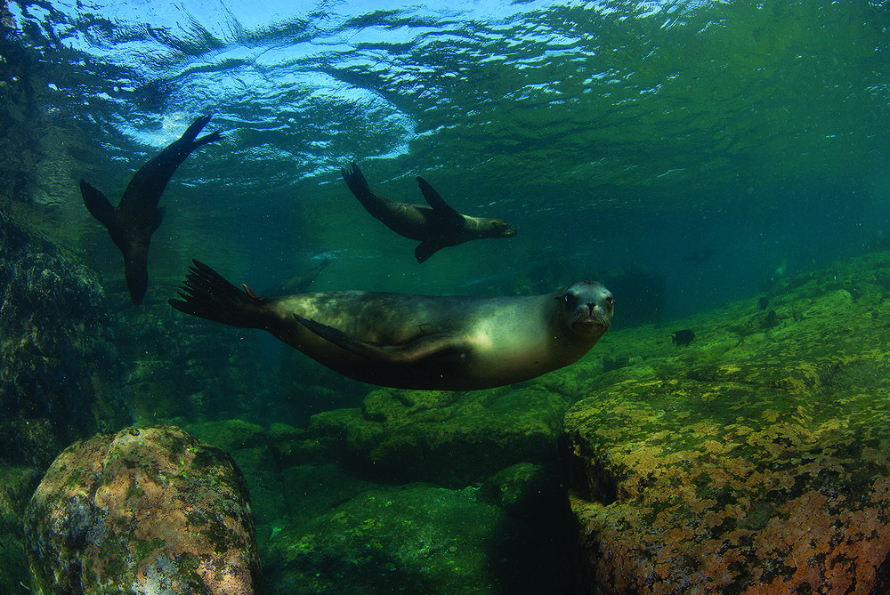 Sea Lions - Sea of Cortez.jpg