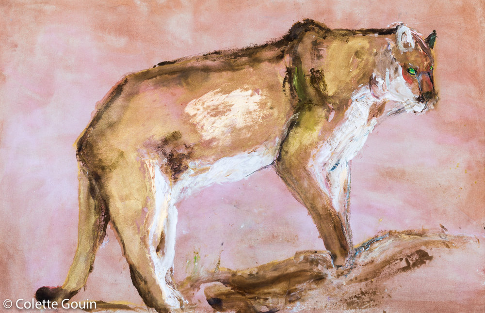 Fife Cougar