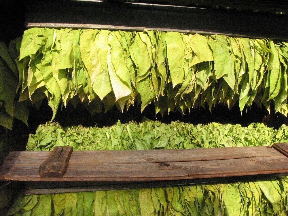 tobacco-16773_1280.jpg
