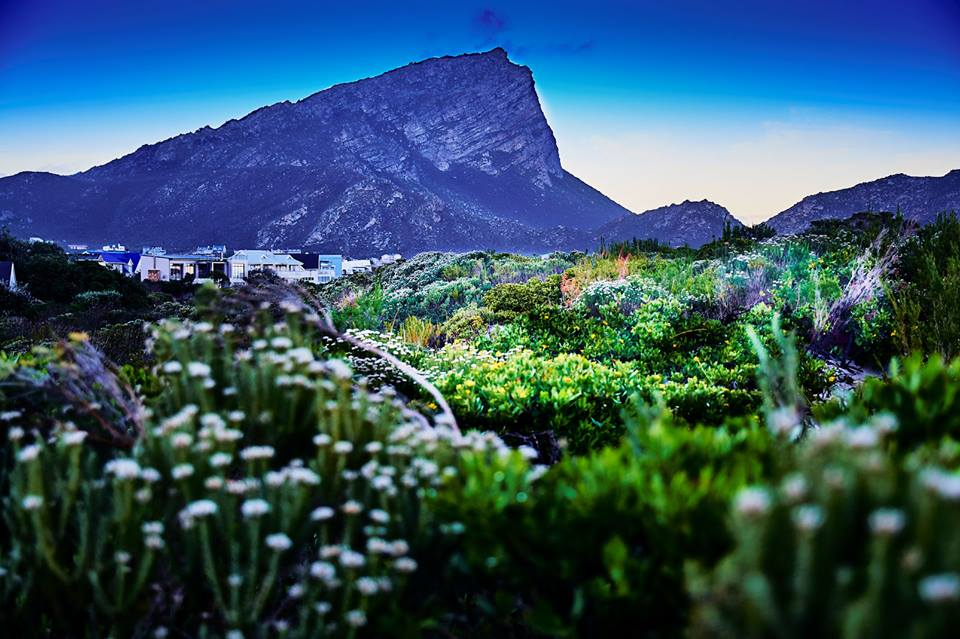 Pringle Bay Bioshpere and our famous mountain