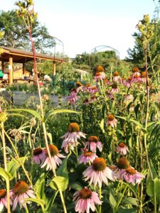 Native prairie plantings encourage lessons about pollinators and add diversity to the space.