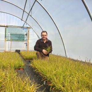 Growing Plants for the bridge in Ireland